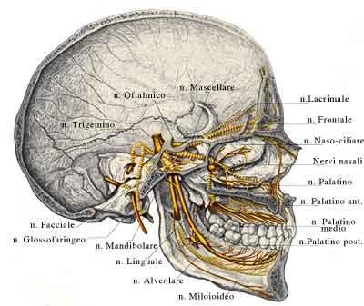 Trattamento di una spina dorsale in clinica